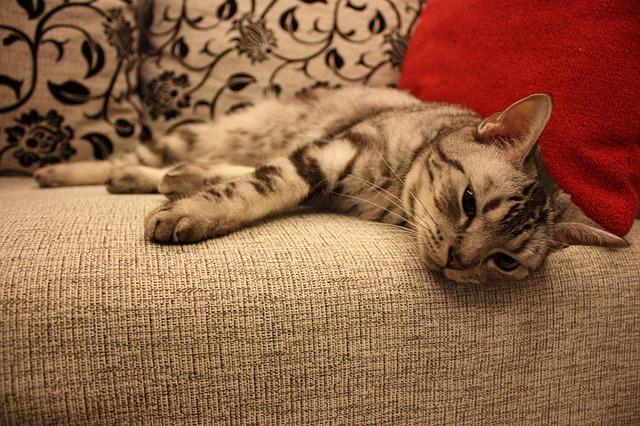 Máte rádi kočky, ale nemůžete je mít doma? Zajděte si do kočičí kavárny